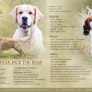 Cheek_to_cheek_jack_the_bear_gr_letacek